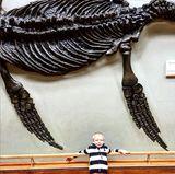 11. Februar 2017  Amadeus Becker liebt, wie fast jedes Kind in seinem Alter, Dinosaurier und kann sich stundenlang im Naturkundemuseum beschäftigen.