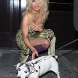 Gut aufgepasst! Pamela Anderson vergisst selbst beim Hund streicheln nicht, ihr offenherziges Dekolleté zu verdecken.
