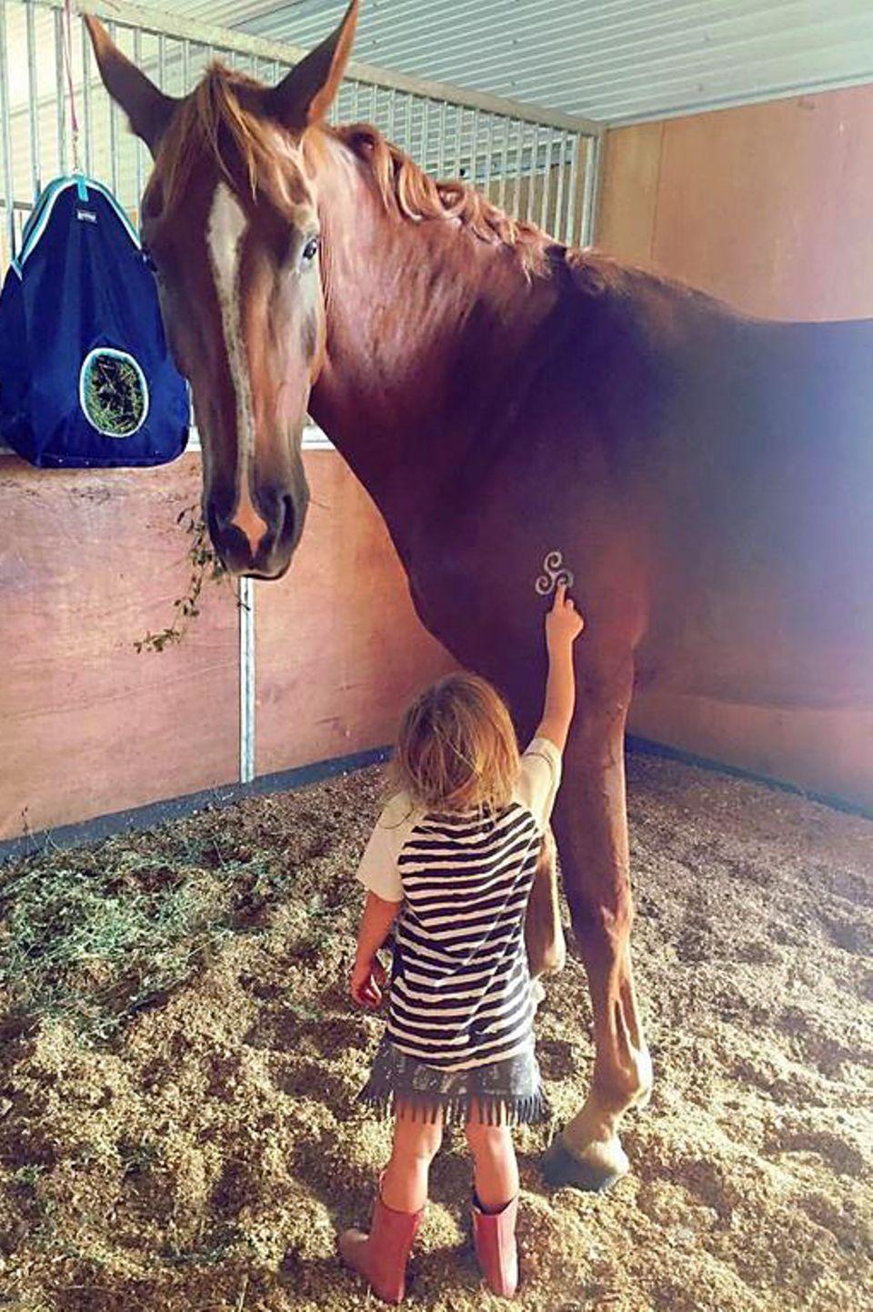 15. März 2017  Die kleine India steht im Stall vor einem hohen Ross und ist fasziniert vom Muster auf dem Fell. Angst vor dem großen Pferd scheint sie nicht zu haben.