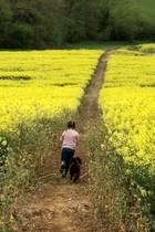 """21. April 2017  Ein Wettrennen mit dem Hund: Tochter Harper rennt eine wunderschön blühende Wiese entlang. """"Ich liebe England"""" - postet David Beckham dazu."""