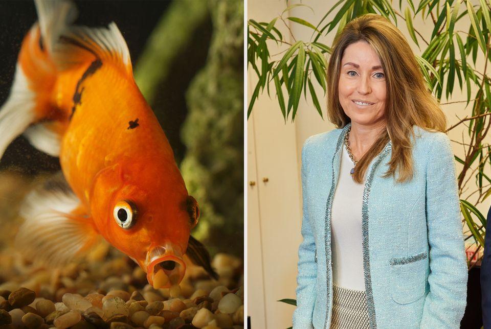 """Goldfisch  Ganz kurz hat es danach ausgesehen, dass Richard Lugner von seinem Ritual abweicht. Mit dem Kosenamen """"Andrea vom Badesee"""" hat er seine jüngste Eroberung vorgestellt. Doch nun hat es Andrea S. doch erwischt: Ihr tierischer Spitzname ist """"Goldfisch""""."""