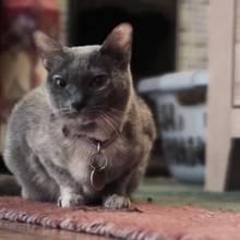 Unbekanntes Risiko: Die Gefahren der Katzenkratzkrankheit
