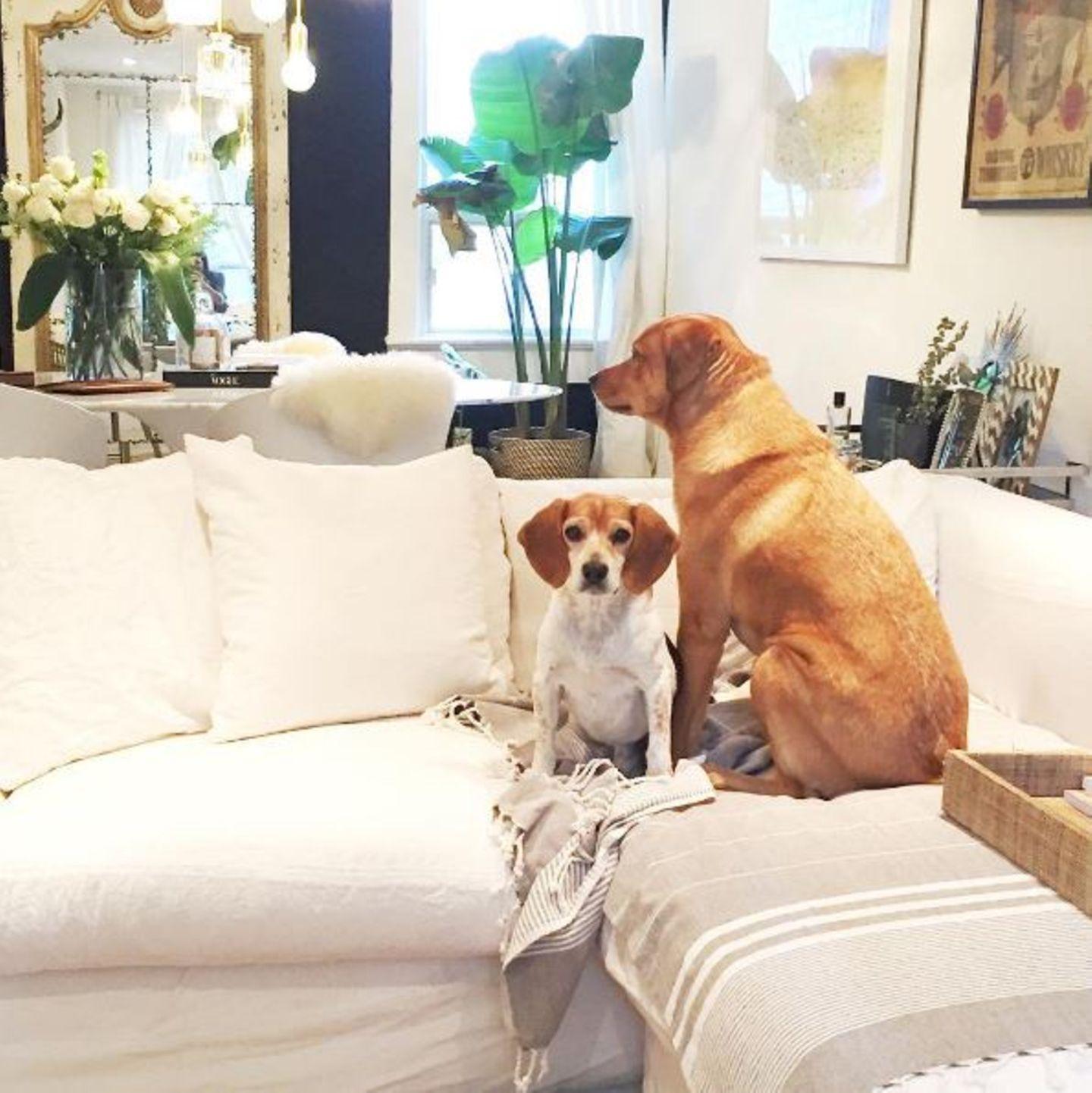 Meghan liebt ihre süßen Begleiter so sehr, dass diese sogar ihre Couch einnehmen dürfen. Und das, obwohl ihr Appartement sonst sehr clean eingerichtet ist. Alles ist in Weiß gehalten, Farbtupfer setzt sie mit Pflanzen. Der Hingucker des Wohnzimmers: ein barocker Spiegel mit Goldrahmen.