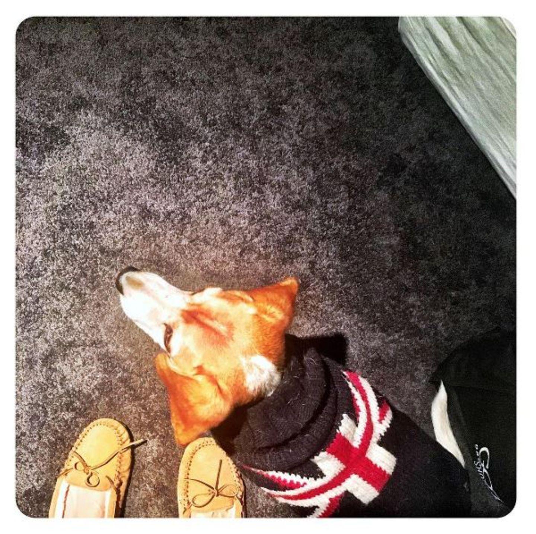 Ihre Liebe zu Großbritannien teilt Meghan Markle mit ihren Hunden und kleidet sie in coole Strick-Pullis.