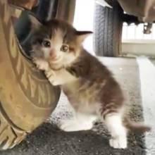 Verlassenes Katzenbaby: Die Kulleraugen retten das Leben dieser Katze
