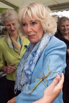 Das Foto sorgt für Gänsehaut: So ganz wohl scheint sich Camilla nicht zu fühlen, bei der riesigen Gespensterschrecke auf dem Arm.