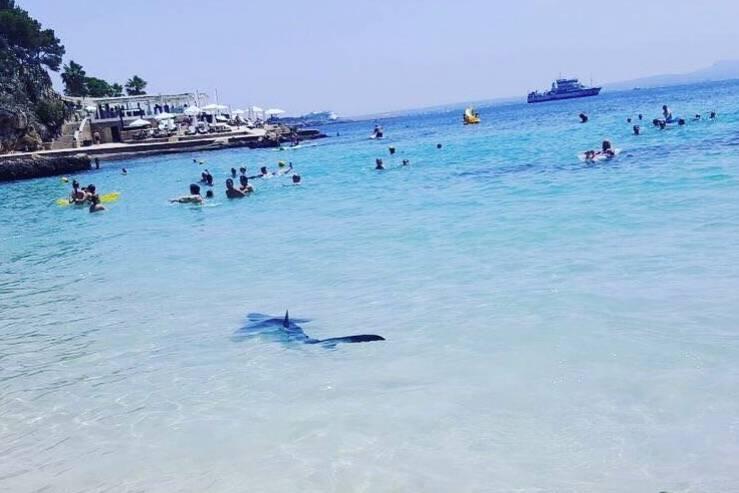 Hai-Alarm auf Mallorca: Tier gefangen und eingeschläfert