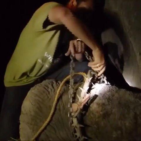 Elefant wird befreit