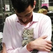 Cleveres Kätzchen: So fand diese süße Katze endlich ein neues Zuhause
