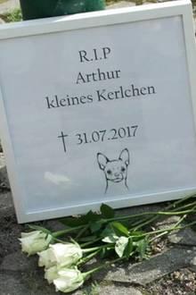 Tierquälerei: Dieser kleine Vierbeiner wurde am helllichten Tag zu Tode getreten