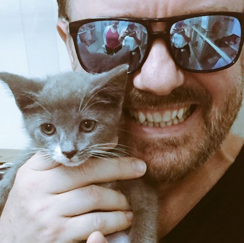 Auch wenn Ricky Gervais bereits einen halben Zoo zu Hause hat, besucht er immer wieder das Tierheim und guckt, welche Spielkameraden er seinem Kater Ollie noch mitbringen kann.