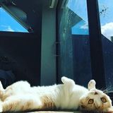 Calippo und Dorito sind die heimlichen Stars von Ed Sheerans Instagram-Account. Immer wieder postet der Sänger Fotos seiner süßen Katzen. Besonders Kater Calippo ist dabei einfach herrlich anzusehen, wenn er auf den Rücken gerollt in Eds Haus herumliegt.
