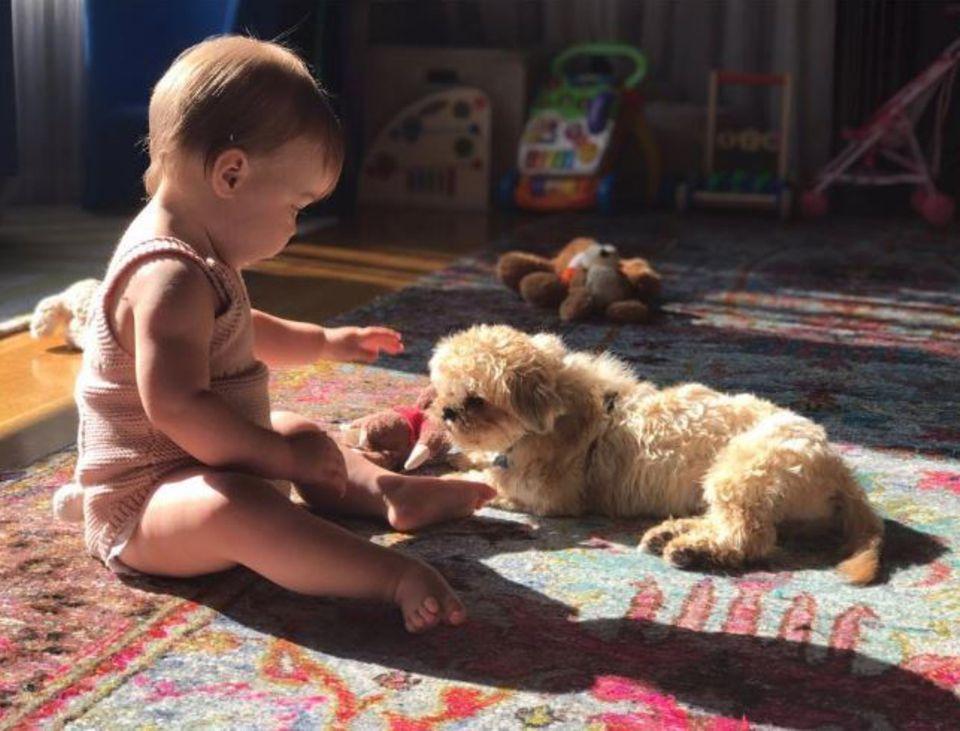"""16. August 2017  Schauspielerin Olivia Wilde ist ganz aus dem Häuschen: Vorsichtig lernen sich ihre süße Tochter Daisy und ihr kleiner Zottel """"Elvis"""" kennen."""