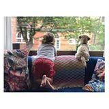 7. August 2017  Selbst wenn die kleine Familie zu Hause bleibt, gibt es einiges zu beobachten. Am besten das klappt das am Fenster in Gesellschaft von Hündchen Elvis.