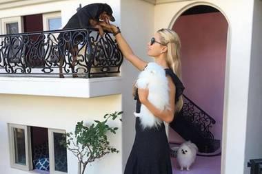 Auch das Zuhause der süßen Tiere ist alles andere als normal. In Paris' Garten steht nicht einfach eine kleine Hundehütte. Nein, nein. Hier befindet sich die Doggy-Mansion. Eine exakte Nachbildung ihrer eigenen Villa, die so groß ist, das sie selbst auch noch hineinpasst und ihren Hündchen einen Besuch abstatten kann. Ins Schwitzen kommt sie dabei allerdings nicht. Das Haus hat eine Klimaanlage. Achja, und Licht und eine Heizung.