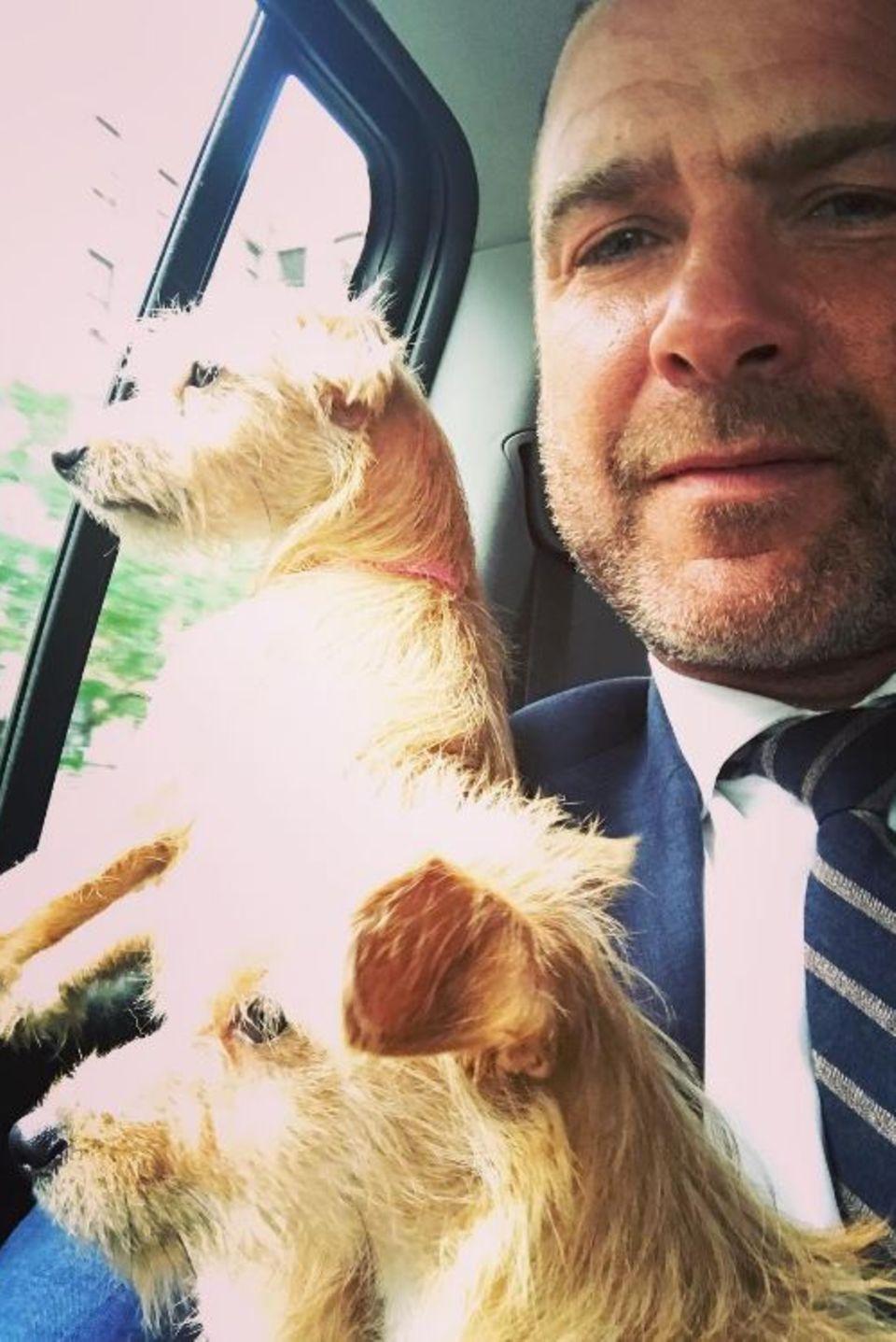 """Hollywoodstar Liev Schreiber postet dieses niedliche Foto, mit den Worten: """"Schaut, was ich hier habe. Ein Paar Waisen aus Houston, die sich den Big Apple zum ersten Mal ansehen."""" Während der Hurricane-Katastrophe in Houston haben nicht nur Menschen, sondern auch viele Tiere ihr Heim verloren. Diese beiden Hunde haben das Glück, in New York bei dem Schauspieler ein neues Zuhause gefunden zu haben."""