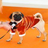 Und sogar Mops-Rüde J.B. ist mit Fliege und in orangefarbenem Samt gekleidet!