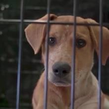 """Hurrikan """"Irma"""": Hunde während Hurrikan ausgesetzt - jetzt spüren Besitzer die Folgen"""