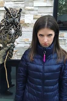 """""""Wir mögen dich nicht"""", postet Anna Kendrick scherzend. Das Comedy-Sternchen hat in der lustigen Eule einen würdigen Spielgefährten gefunden."""