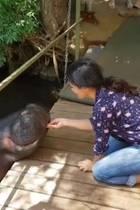 """""""Nilpferde sind die Tiere, die für die meisten Menschenopfer in Afrika verantwortlich sind, aber Jessica ist ganz lieb"""", postet Salma Hayek. Die Schauspielerin hat ein Video gepostet, auf dem sie das große und zum Glück sanfte Wesen füttert."""