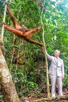 """In Malaysia besucht Prinz Charles das """"Semenggoh Wildlife Centre"""" und sorgt beim Orang-Utan-Füttern für dieses schöne Motiv."""