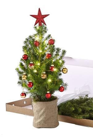 Oh Tannenbaum Statt eines großen Ungetüms können Sie Freunden und Verwandten mit diesem Mini-Bäumchen eine Riesenfreude bereiten. Süßen Weihnachtsschmuck gibt es sogar inklusive. Von Bloom & Wild, ca. 30 Euro