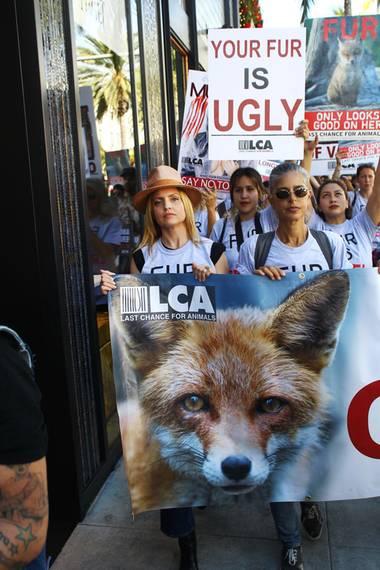 24. November 2017  Schauspielerin Mena Suvari hat sich in Beverly Hills einer Protest-Aktion gegen Pelz angeschlossen.