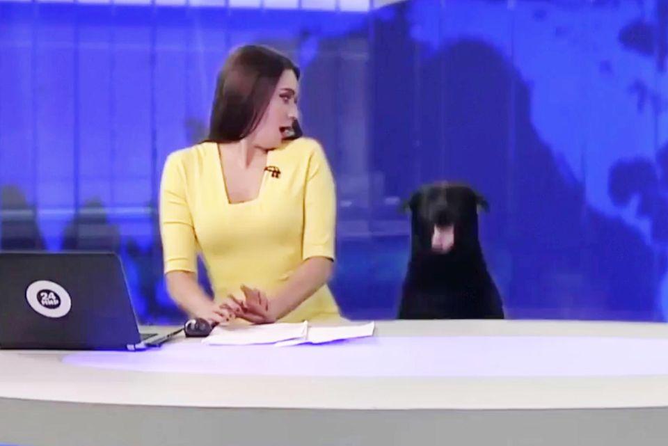 Fernsehpanne während Live-Sendung