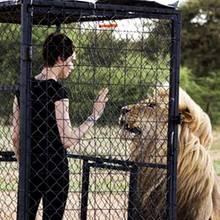 Cara Delevingne postet ein Foto, welches Fans hoffen lässt, dass dieser Käfig doch bitte, bitte halten möge. Das schöne Model hingegen freut sich riesig über die atemberaubende Begegnung mit ihrem königlichen Lieblingstier, dem Löwen.