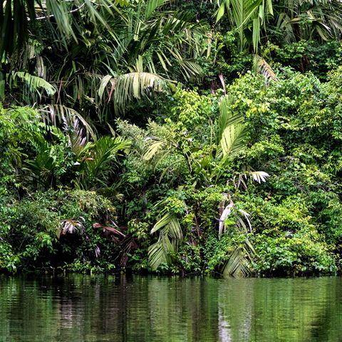 Symblfoto Dschungel