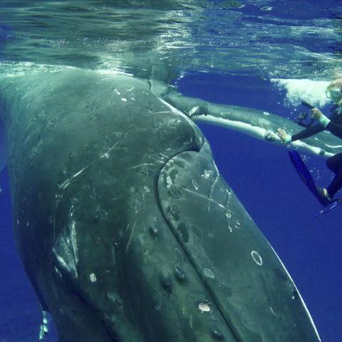 Schockierend: Fischer fährt mit 2,4 Meter langem Hai den Highway entlang