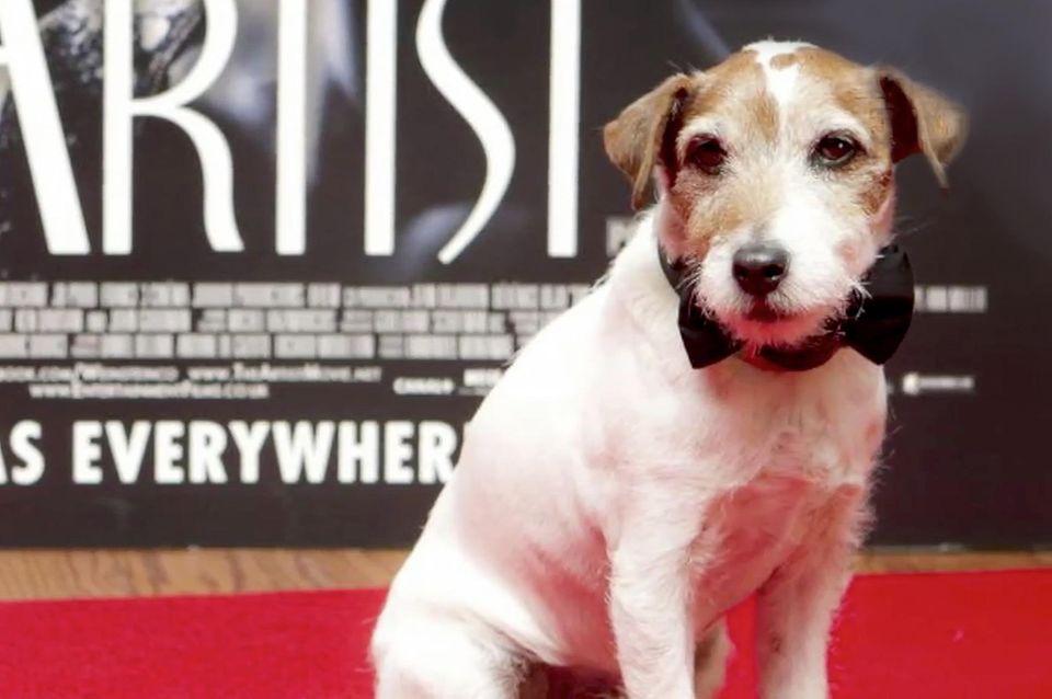 Hollywoods Hunde