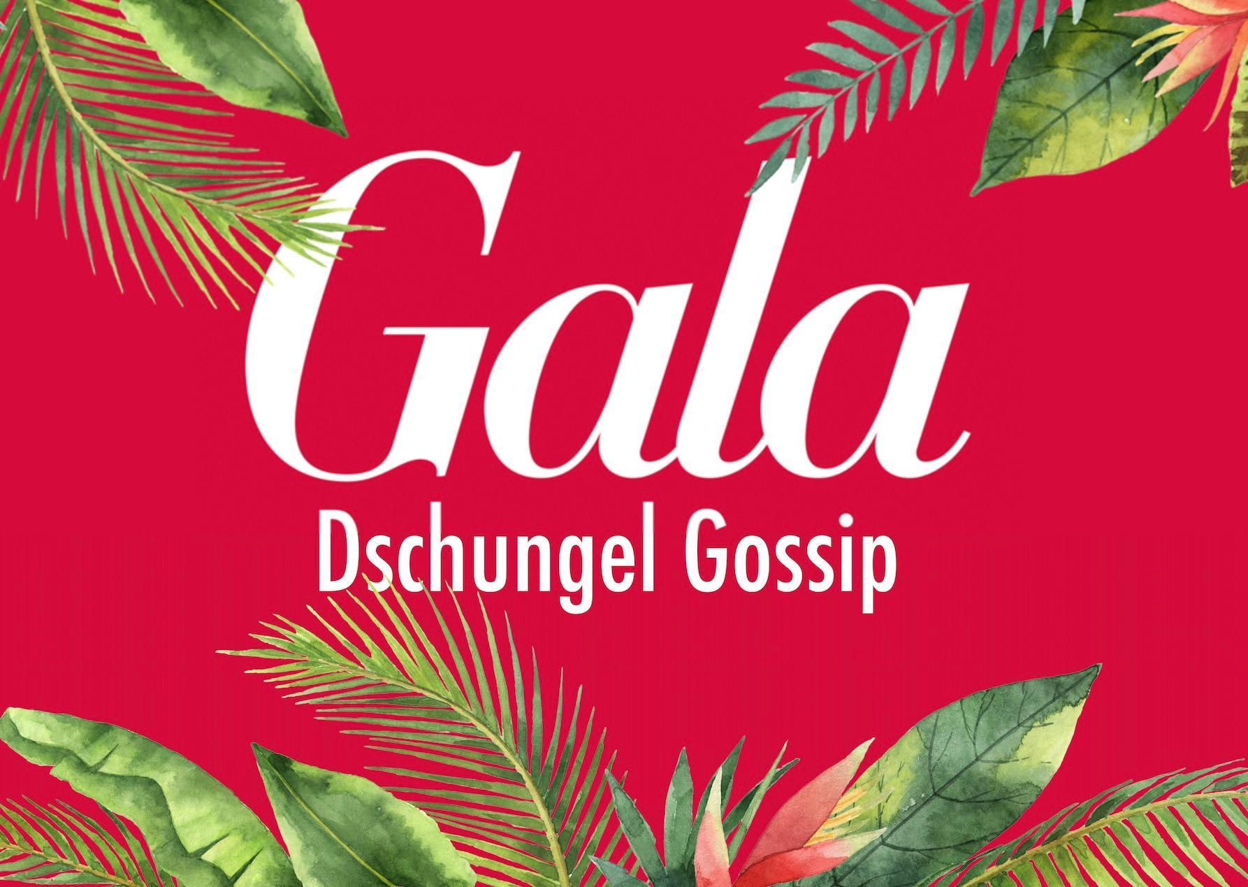 GALA Dschungel Gossip