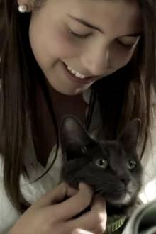 Katzenstreichler.
