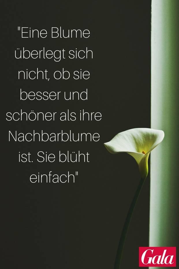 Pinterest Zitate: Kleine Lebensweisheiten und Sprüche - S. 19 | GALA.de