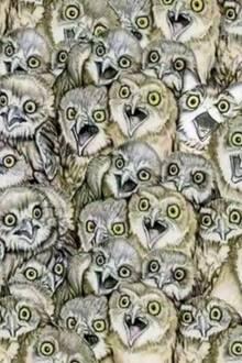 Rätselspaß: Finden Sie die Katze, die sich in diesem Bild versteckt?
