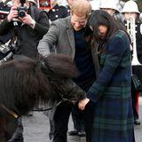13. Februar 2018  Autsch! Plötzlich knabbert das Pony Meghans Hand an. Harrys Verlobte nimmt's mit Humor.