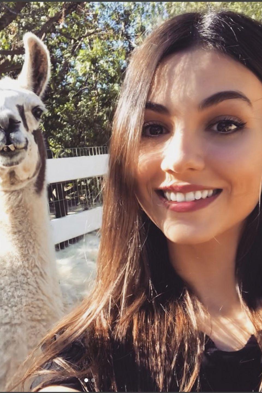 """Wie süß ist das denn?! Victoria Justice postet ein Selfie und einem Lama. Dazu schreibt sie: """"Hatte die beste Zeit überhaupt am thegentlebarn heute! Sie retten und rehabilitieren Tiere, die missbraucht, krank und alt sind. Sie geben ihnen so viel Liebe, dass es unglaublich ist."""""""