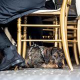 13. Februar 2018  Trauer auf Schloss Amalienborg: Zum Eintrag in die Kondolenzlisten hat jemand passenderweise seinen Dackel mitgebracht. Prinz Henrik, den Dackelfreund, hätte das sicherlich gefreut ...