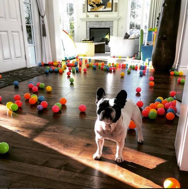 """""""Komm runter, um ins Fitnessstudio zu gehen und finde die Regenbogen-Überraschung auf dem ganzen Boden. Ich: Wer hat diesen Mist gemacht?"""", postet Dwayne Johnson. Ob die kleine Bulldoge wohl dieses Bälle-Chaos angerichtet hat?"""