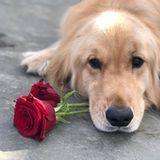 """Für Jennifer Garner läuft es momentan nicht so prickelnd in der Liebe. Wenigstens kann die Schauspielerin immer auf ihren lieben Hund Birdie zählen. """"Frohen Valentinstag von mir an mein Mädchen"""", postet Garner."""