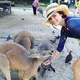 Wie süß ist das denn?! Jaimie Alexander füttert in einem australischen Park Kängurus und hat sichtlich Spaß dabei.