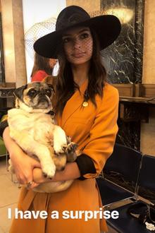 Auf Instagram verrät Emily Ratajkowski am 23. Februar völlig überraschend, dass sie geheiratet hat. Ebenso außergewöhnlich ist der Braut-Look, den sie dazu in ihrer Story präsentiert. Sie trägt statt traditionellem Schleier einen Hut mit Netzstoff, sowie ...