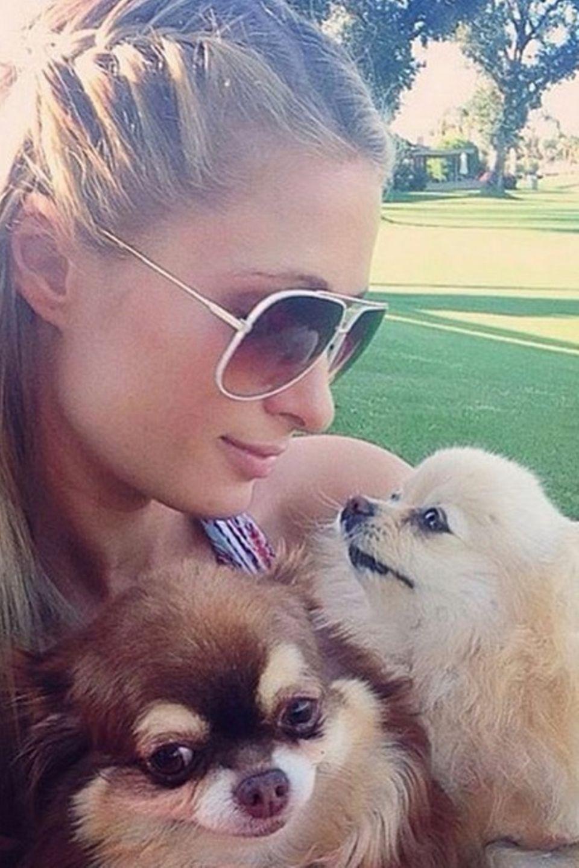"""Am 20. Februar ist der """"Tag der Haustiere."""" Dies nahm Paris Hilton zum Anlass, ihre beiden treuen Wegbegleiter auf Instagram zu präsentieren."""