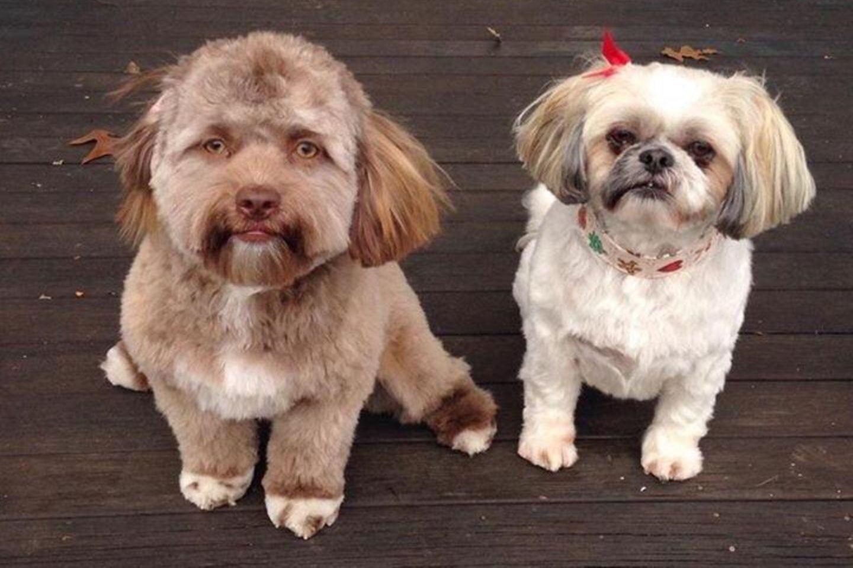 Yogi (links) sieht auf den ersten Blick aus wie ein gewöhnlicher Hund - doch etwas an ihm ist ganz besonders.