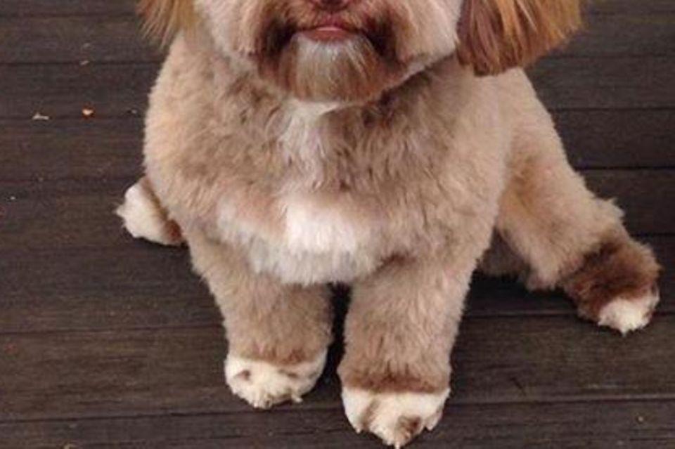 Das Internet dreht durch: Dieser Hund sieht aus wie ein Mensch