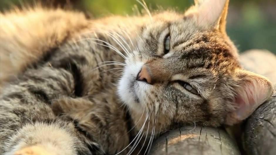 Katze / Symbolbild