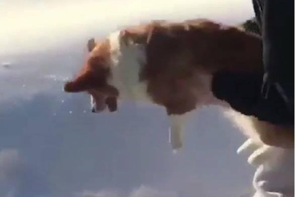 Was passiert mit diesem kleinen Hund?