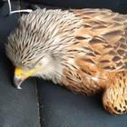 Diesen Vogel hat der Reporter an einer Straße aufgelesen. Doch er ahnte nicht, dass er bald aufwachen würde.