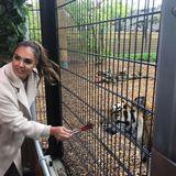 Trotz Zaun zwischen ihnen hat Tamara Ecclestone beim Füttern des Tigers gehörigen Respekt.